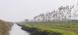 Imm Impianti arborei lungo il Tartaro