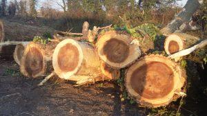 Alcuni tronchi di alberi tagliati sulla Fossa Calfura. Si nota come al loro interno siano completamente marci