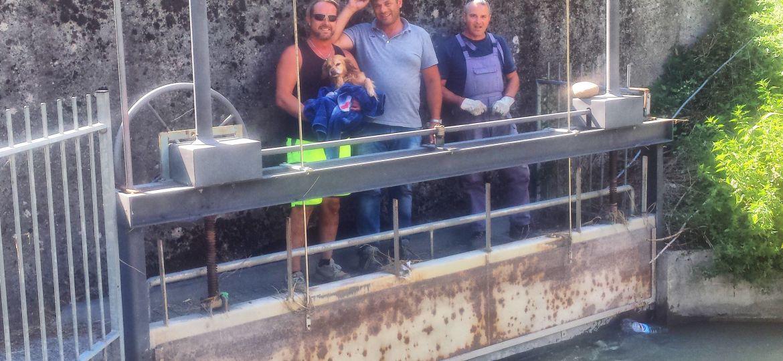cane salvata canale sona consorzio bonifica luglio 2017 (2)