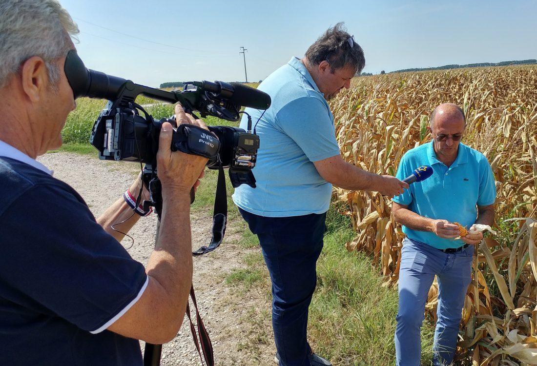 servizio telenuovo siccità bassa veronese agosto 2017 (22)