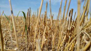 servizio telenuovo siccità bassa veronese agosto 2017 (29)