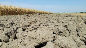 servizio telenuovo siccità bassa veronese agosto 2017 (32)